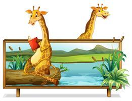 Dois, girafa, por, a, lago vetor