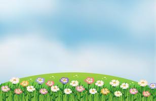 Vista, colina, flores vetor