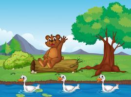 Um urso sorridente e patos vetor