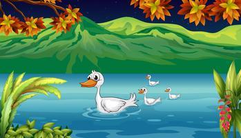 A mãe pato e seus patinhos no rio vetor