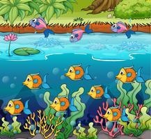 Escola de pescaria vetor