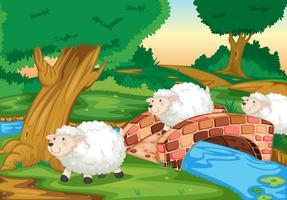 Ovelhas vetor