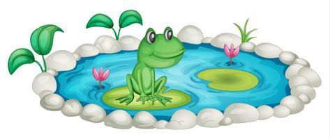 Sapo em uma lagoa vetor