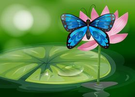 Uma borboleta azul e a flor rosa na lagoa vetor
