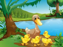Um, mãe, pato, com, dela, ducklings vetor