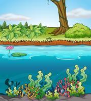 Um rio vetor