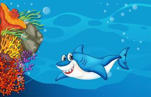 Um tubarão sob o mar