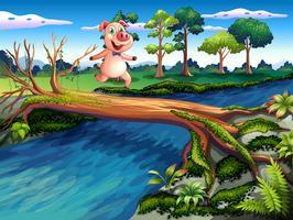 Um, porco fêmea, cruzando rio