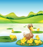 Um pato e seus patinhos na lagoa vetor
