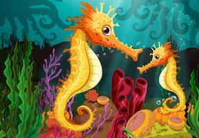 Dois cavalos-marinhos no fundo do mar vetor