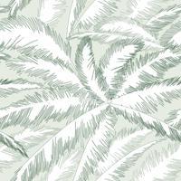 Folhas de árvore de palma padrão floral. Primavera de natureza texturizada de fundo.