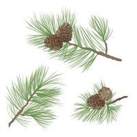Pinha. Ramo de pinheiro isolado. Decoração Floral Verde vetor
