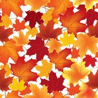 Bordo de outono deixa padrão sem emenda Fundo floral