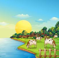 Vacas na fazenda vetor