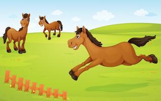 cavalos no prado vetor