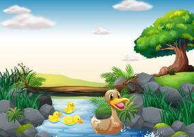 Patos e rio vetor