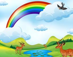 Veados e arco-íris vetor