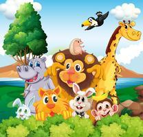 Um grupo de animais perto do rio vetor