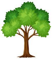 Árvore verde no fundo branco vetor