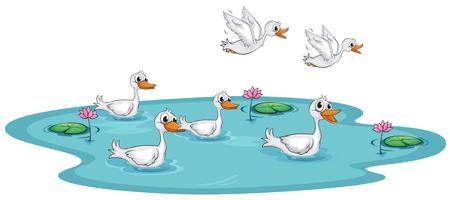 Um, grupo, de, patos, em, a, lagoa vetor