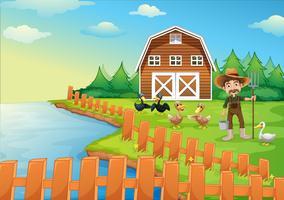 Um, agricultor, alimentação, seu, patos vetor
