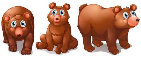 Ursos vetor