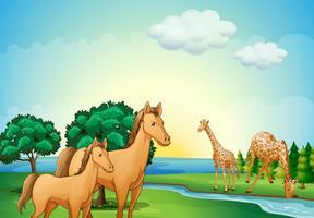 Cavalos e girafas perto do rio vetor