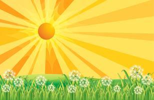 Raios de sol vetor