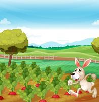 Um coelho correndo na fazenda vetor