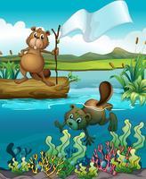Castores no rio vetor