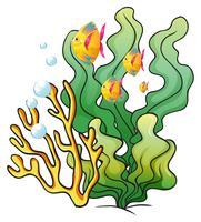 Uma escola de peixes perto das algas