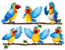 Papagaio vetor