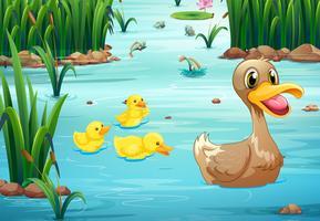 Patos e lagoa vetor
