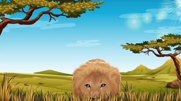 Um leão em cena de savana vetor