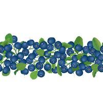 Teste padrão sem emenda do arando Fundo floral da baga. Comida de verão vetor