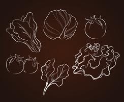 desenho de legumes vetor
