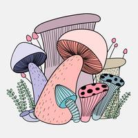 Cogumelos têm os benefícios para a saúde de todos.