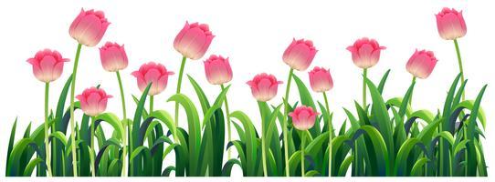 Tulipas cor de rosa no jardim vetor