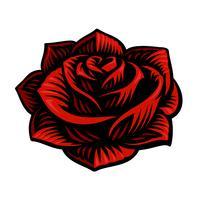 Vetorial, ilustração, de, rosa, flor vetor