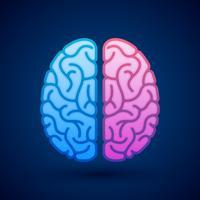 Cérebro humano, hemisférios cerebrais, pictórico, símbolo, ilustração vetor