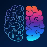 Vetor de hemisférios do cérebro humano