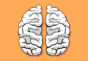 Vetor de hemisférios de cérebro humano preto e branco