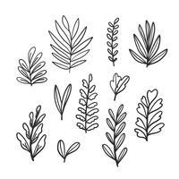 Conjunto de coleta de folhas de Doodle vetor