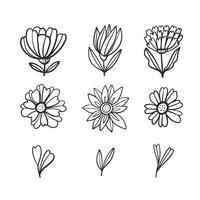 Doodle de flores e folhas coleção vetor