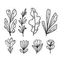 Folhas de doodle bonito e coleção de flores vetor
