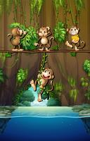 Cena com macacos e rio vetor