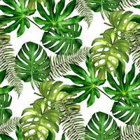 Folhas Tropicais. Fundo Floral Sem Emenda. Isolado No Branco. Ilustração vetorial. vetor