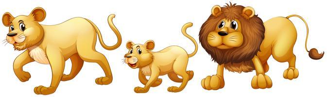 Família de Leão caminhando juntos vetor