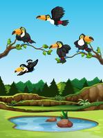 Pássaro tucano na natureza vetor