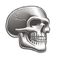 Vetorial, ilustração, de, um, perfil crânio vetor
